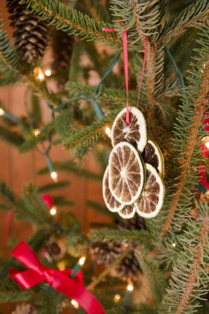 Traditional Victorian Christmas decorations made of preserved orange slides, on the tree at Standen, West Sussex
