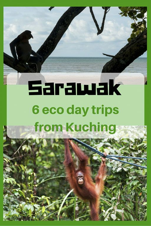 Are you visiting the Malaysian state of Sarawak wonder what to do? Here are 6 eco day trips from Kuching, the state capital. Orangutans, anyone?