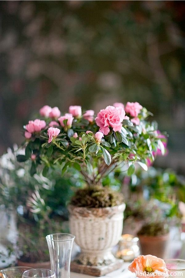Best ideas about potted plant centerpieces on