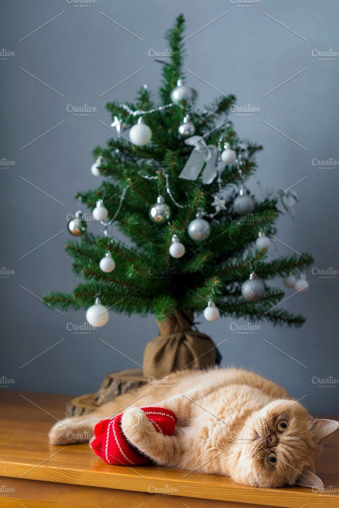 Cat playing under Christmas tree by The baking man on @creativemarket