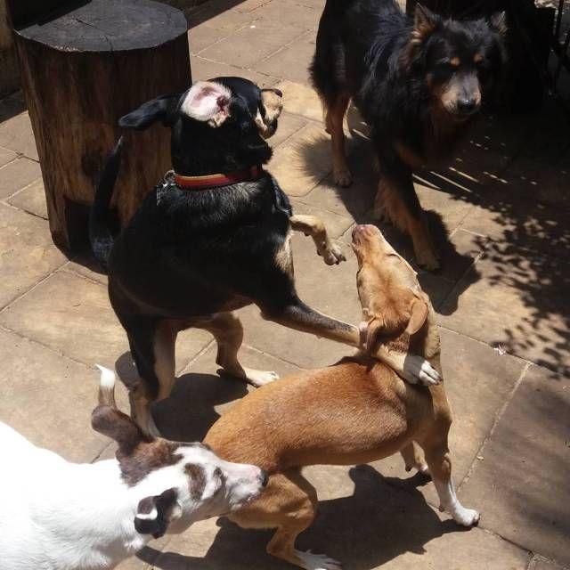 """Na Creche e Hotel """"Ossos do Ofício"""" na Vila Mariana seu cão recebe todos os cuidados. Aqui você tem ainda fisioterapia para seu cão e adestramento."""