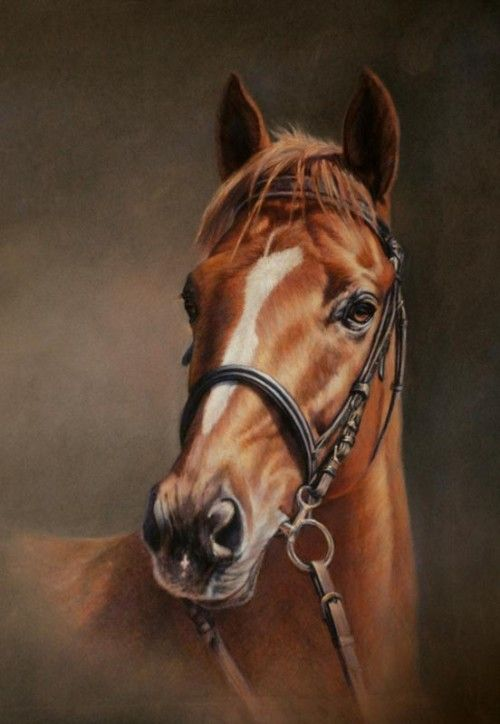 Horse painting by Claudia Duffe                                                                                                                                                                                 Más