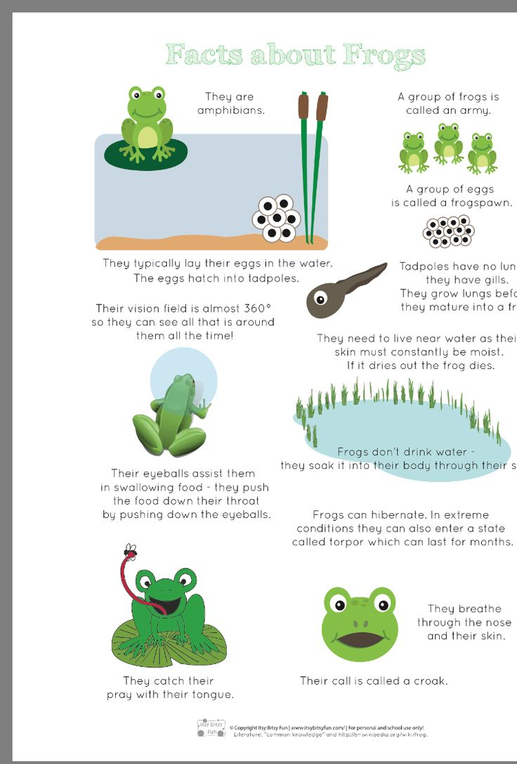 Tv Frog Deutsch