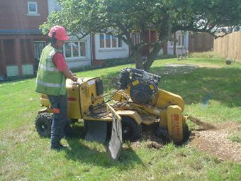 Professional tree surgeons from Roots and Shoots offering tree surgery, landscape gardening along with stump grinding and tree removal services in Kingston, Richmond, Guildford and surrounding areas. Roots and Shoots is a well reputed tree care company providing services more than 10 years with NPTC certified tree surgeons..http://bit.ly/1U5BSul