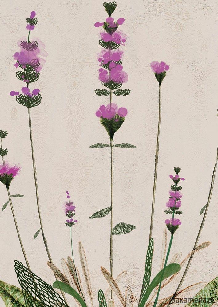 3 ilustracje botaniczne - plakaty - Pakamera.pl