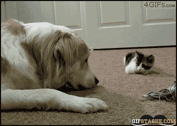 Stealthy Boop - - GIF Stache - Funny Animated GIFs