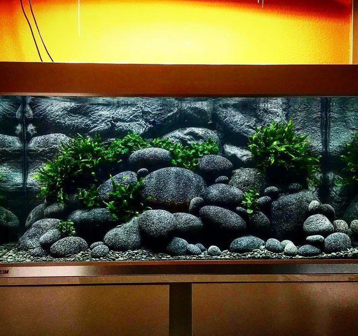 aquariums outreach team worked - 735×689