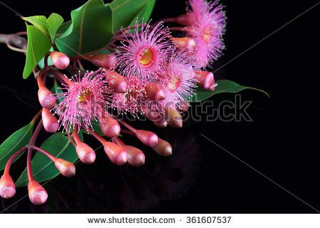 Gum Flowers Stock Photos, Royalty-Free Images & Vectors - Shutterstock
