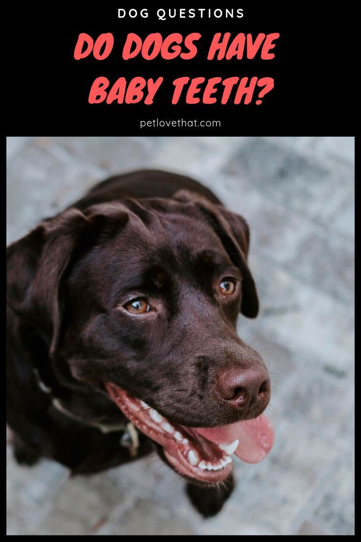 The Entire Process Of The Growth And Fall Of A Dog S Teeth Is