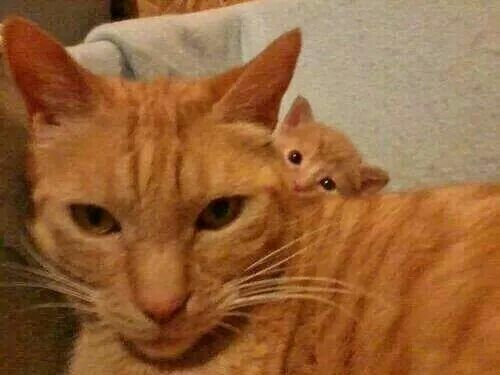 """Peek!!!   =^..^=Thanks, Pinterest Pinners, for stopping by, viewing, re-pinning, & following my boards.  Have a beautiful day! ^..^ and """"Feel free to share on Pinterest ^..^   #catsandme #cats #doghealthcareblog"""