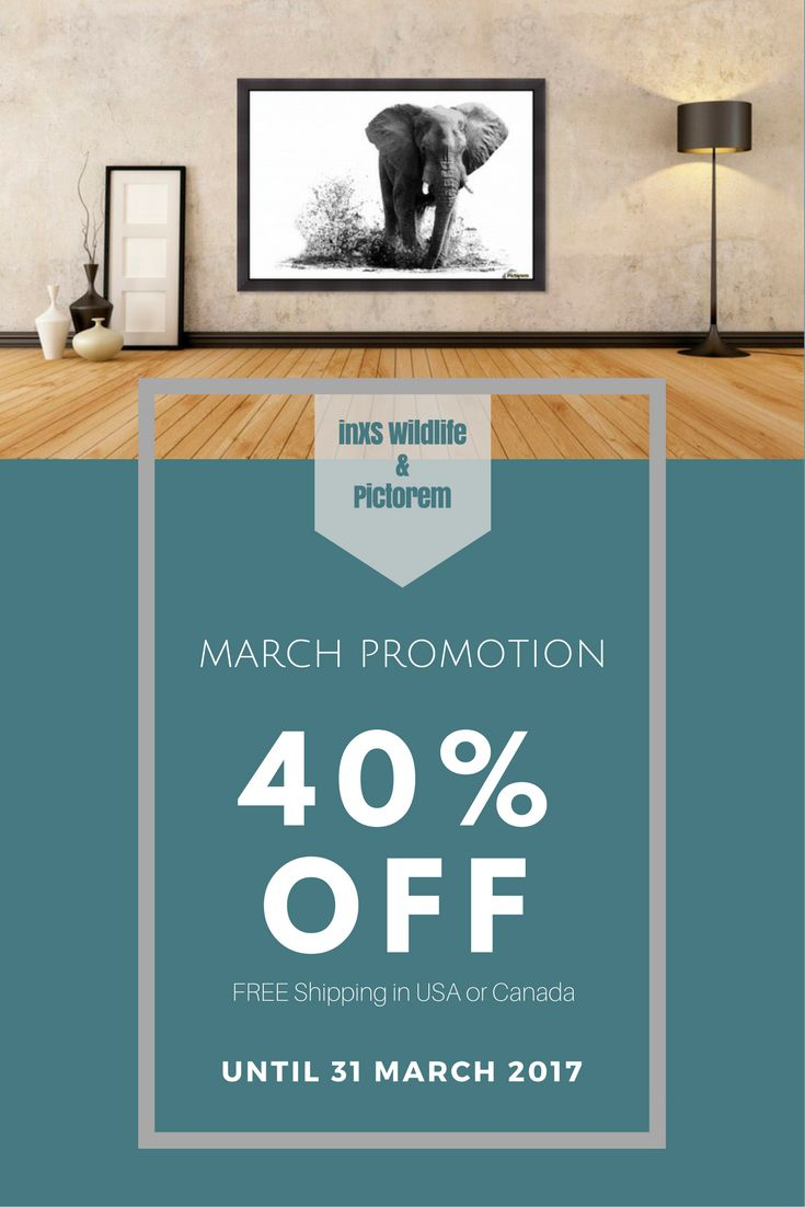 MARCH PROMO - 40% off all wall art until end of March 2017. Get this Splashing Elephant design by inXS Wildlife on canvas, brushed metal, acrylic, wall murals, etc. Hurry now!