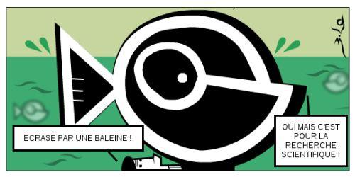 Baleines : le chaud et l'effroi  #fr   #french   #baleine   #cbi    http://frederic.baylot.org/post/271014-baleine