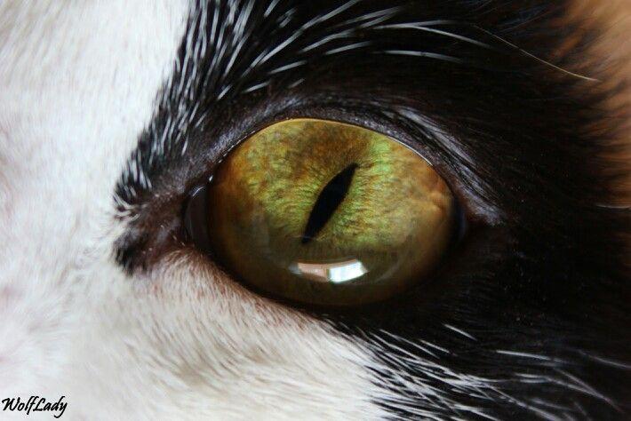 Occhi da regina. @wolflady90