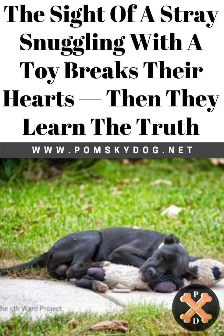 The Sight Of A Stray Snuggling With A Toy Breaks Their Hearts