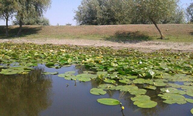 Delta Dunarii Letea
