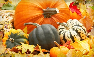 Groupon - Fall-Festival Package with Hayride at The Pumpkin Patch San Antonio (Half Off). Two Options Available. in San Antonio (Far West Side). Groupon deal price: $16.00