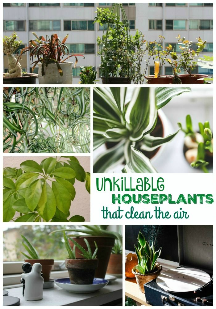 10 unkillable houseplants that clean the air a well for Good plants to have indoors