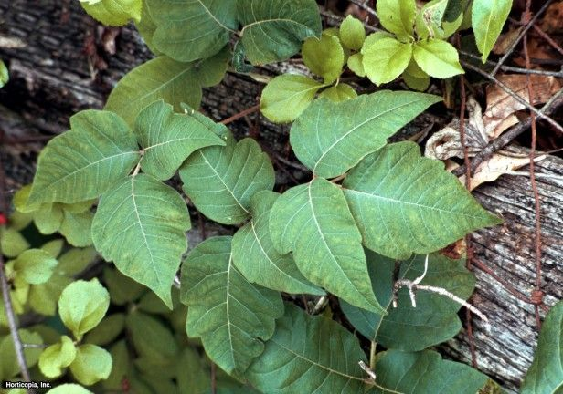 22 Poisonous Plants: Watch Out for These Bad Boys