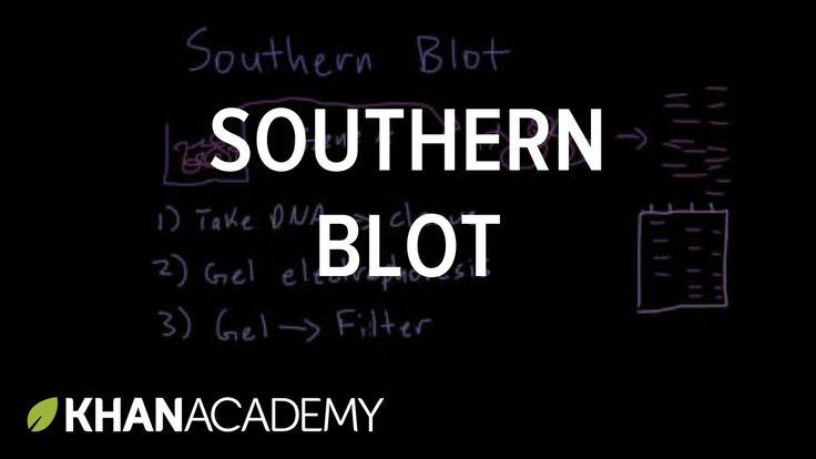 Southern blot   Biomolecules   MCAT   Khan Academy