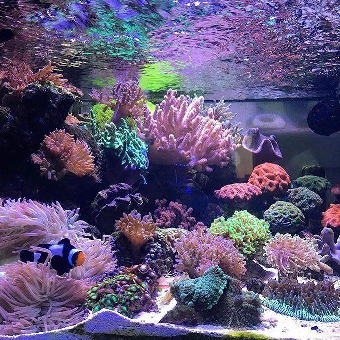 1000+ Images About Aquarium On Pinterest
