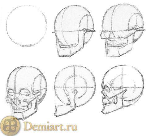how to draw skull - Recherche Google
