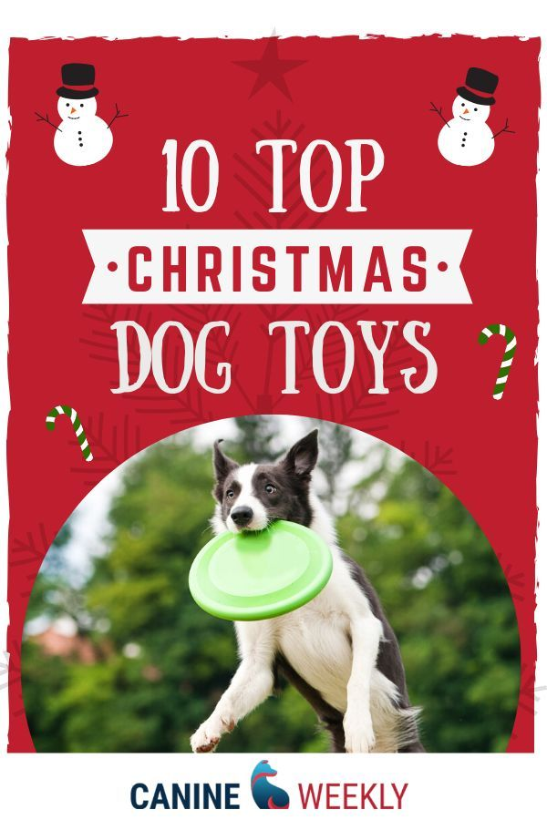 10 Best Toys For Big Dogs In 2020 Bones Ropes Balls More