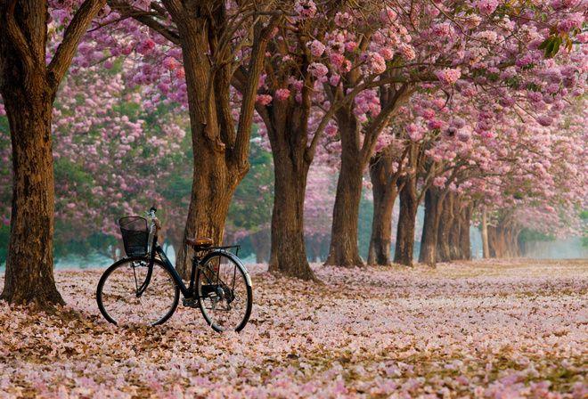 природа, фото, весна, красиво, велосипед, цветение, позитив