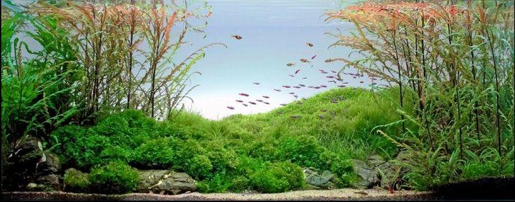 世界水槽レイアウトコンテストの写真が美しい!(いやまじで)