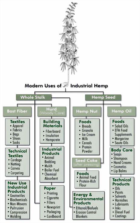 Modern Uses of Industrial Hemp