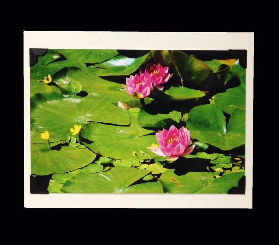 PHOTO GREETING CARD, nature photography, blank card, photo note card, birthday card, Mother's Day, special occasion note card, lily pad by turtlesandpeace. Explore more products on http://turtlesandpeace.etsy.com