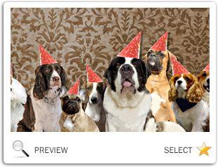 Birthday Ecards Care ~ Best dog birthday ecards images dog birthday e