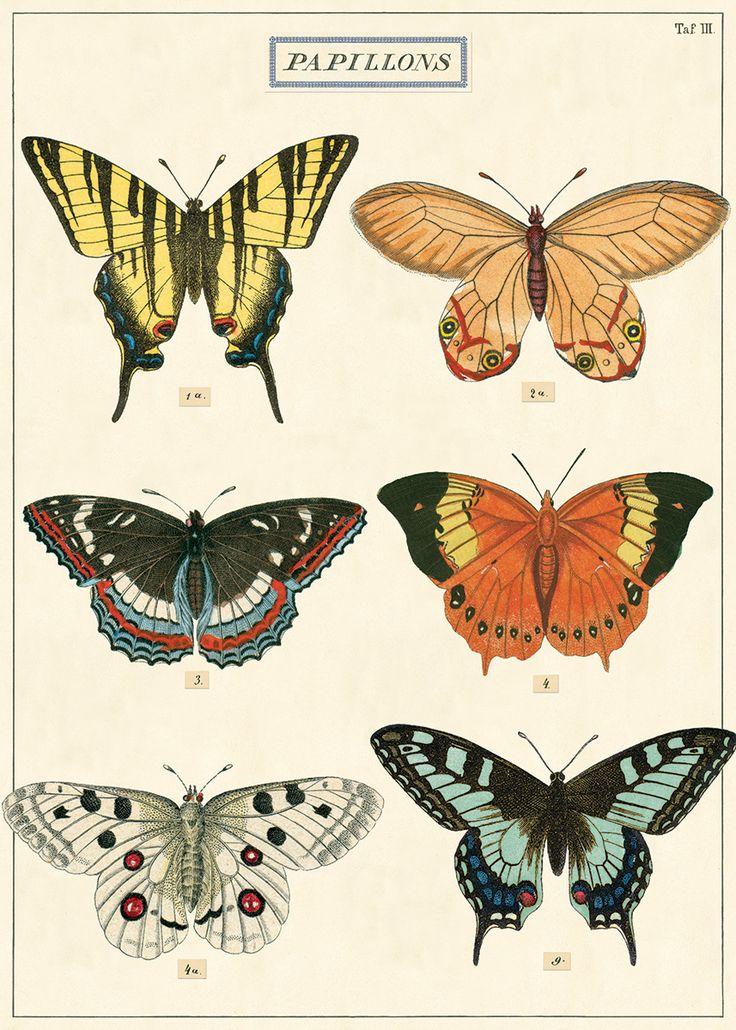 Prachtige poster, die ook te gebruiken is als inpakpapier. Formaat 50 x 70 cm. #butterfly #poster #cavallini