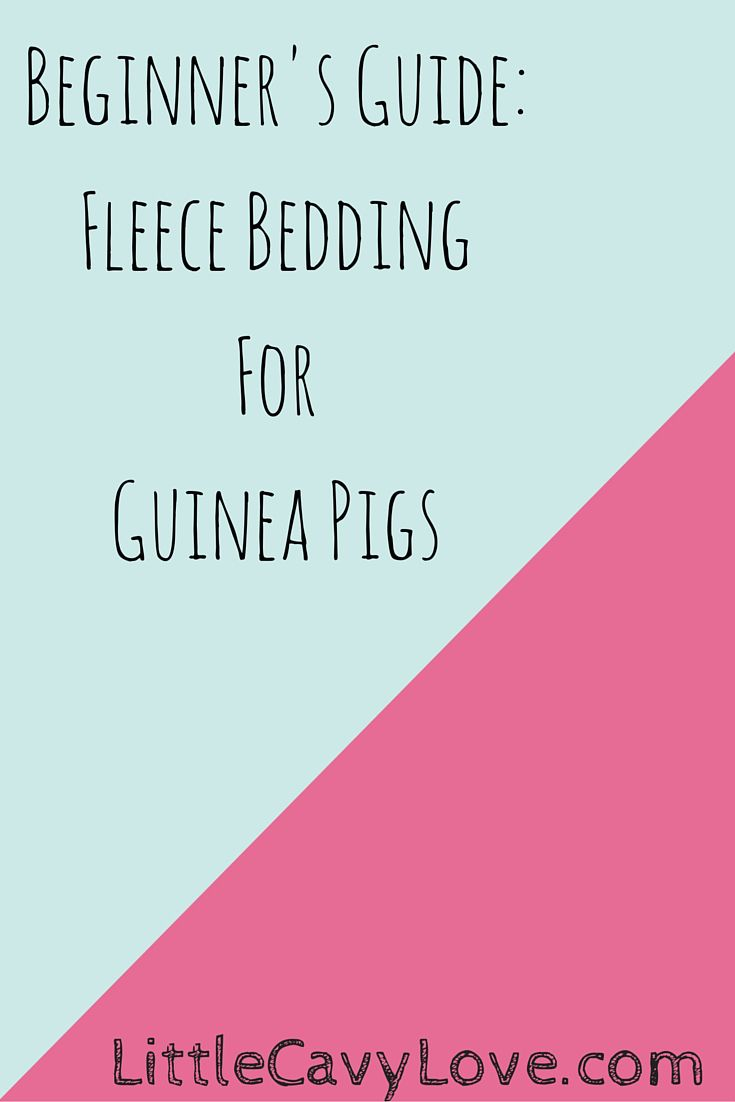 Are you interested in learning about using fleece for your guinea pig's cage? CLICK HERE for all you need to know to start using fleece bedding today!