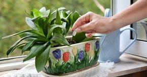 Tudtad, hogy az élesztőtől sokkal gyorsabban nőnek a szobanövények
