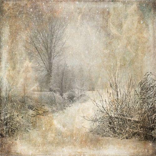 sd_woodland-winter-p4.jpg