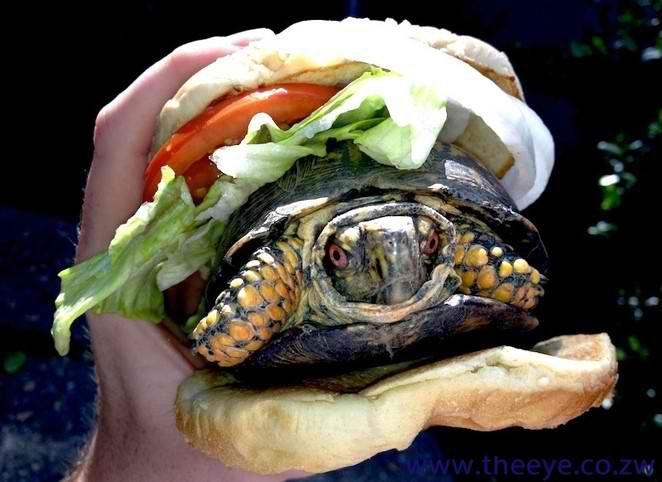 tortue cachée dans un hamburger pour passer par la douane