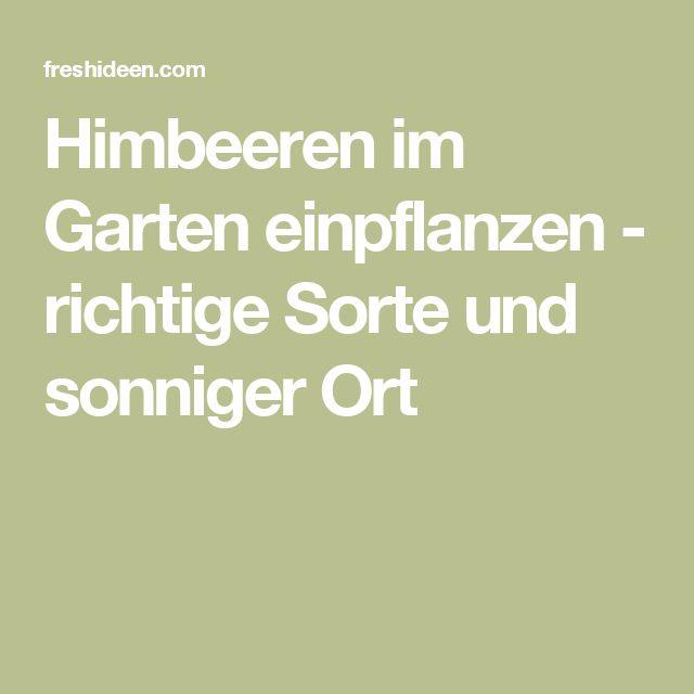 Himbeeren im Garten einpflanzen - richtige Sorte und sonniger Ort
