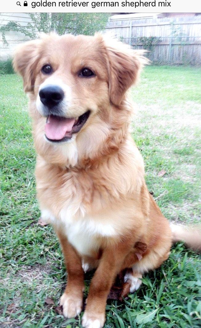 Pin By Cristy Henggeler On Pups Dogs Retriever Mix Golden