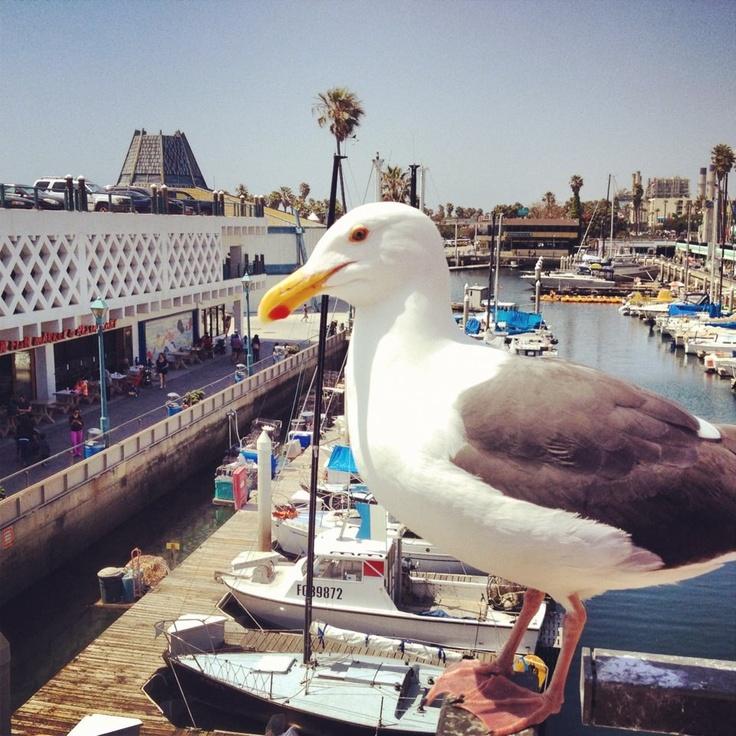 Redondo Beach CA this is the last