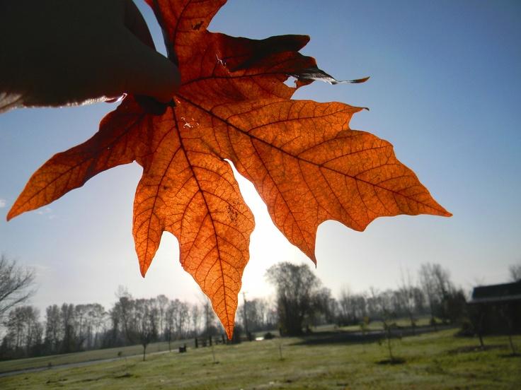 sunshine leaf :)