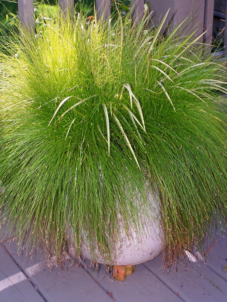 Fiber Optic Grass: Optical Grass, Ornaments Grass