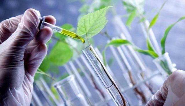Os Organismos Geneticamente Modificados, vistos de uma outra perspetiva