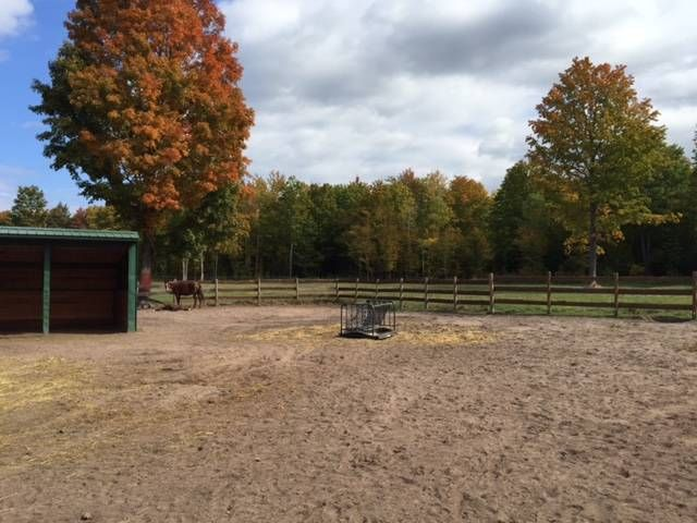 1000 images about michigan horse properties on pinterest horse farms country estate and log