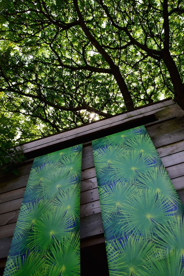 #Rumruk #Wallpaper #Palms #Green #Nature