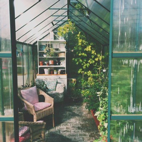 Blommor i fönstret: Tomat flugan