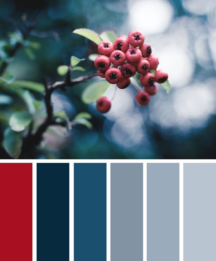 Berry Blue And Grey Color Palette Grey Color Palette Blue Color Schemes Red Colour Palette