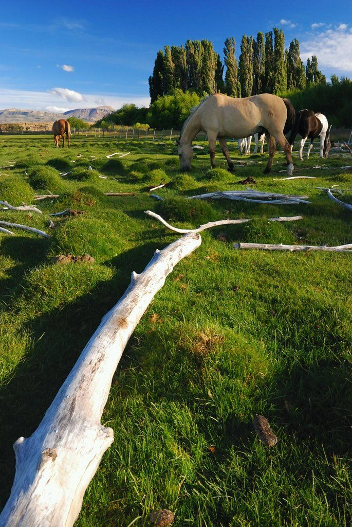 Logs and Horses, Lago Argentino Department, Santa Cruz Province, Argentina