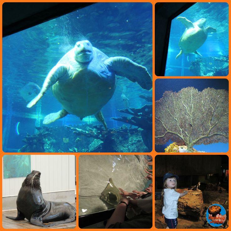 New England Aquarium, Boston, MA. Children under 3 are Free! Duck tours leave from the aquarium.