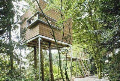 Самые удивительные дома на деревьях.