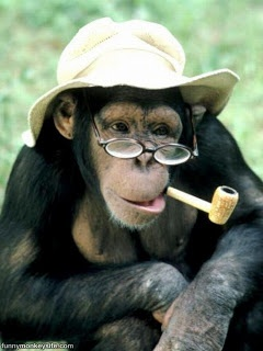 Funny Monkey | Monkey Funny Face | Monkey Images - Wallpaper | Indian Wallpaper | Photography | Nature | Funny Cartoons | Celebrities | Link Exchange